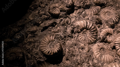 Photo Fossil & Ammonite for fuel energy