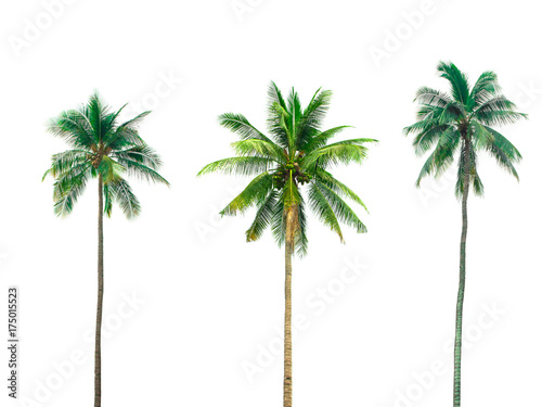 Stickers pour porte Palmier collection Palm coconut the garden isolated on white background