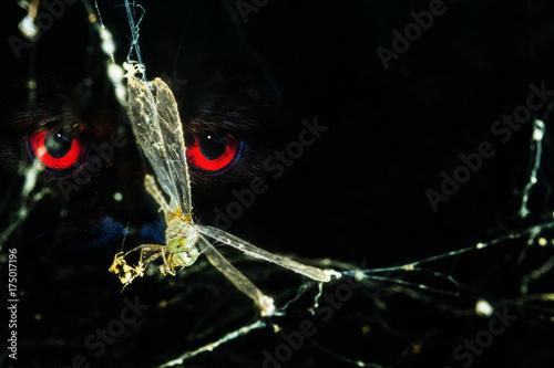 Plakat ważka w pajęczej sieci