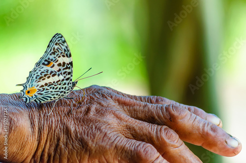 view on butterfly on hand of olf man