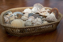 Seashells In Basket