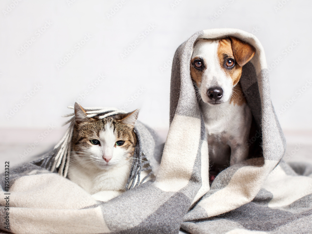 Dog and cat under a plaid