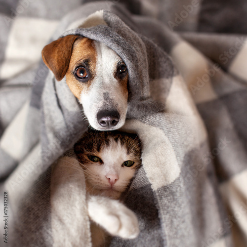 Poster Hond Dog and cat under a plaid