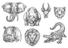 Vector Sketch Zoo Wild African...