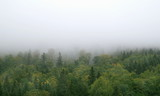 mgła nad górskim lasem