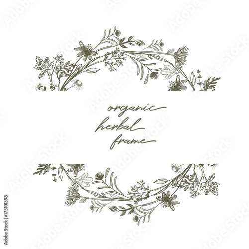 Organic Herbal Frame - Buy this stock vector and explore similar ...