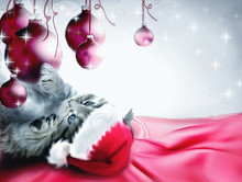 Cute Christmas Greeting Card With Small Kitten