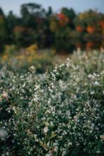White Wildflowers In Autumn