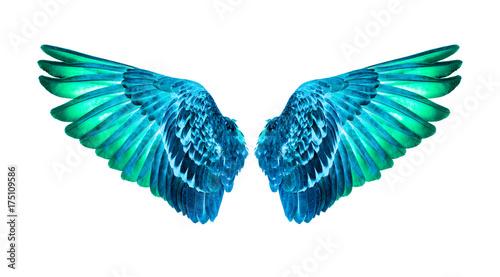 Fényképezés  wings of birds on white background,green wings