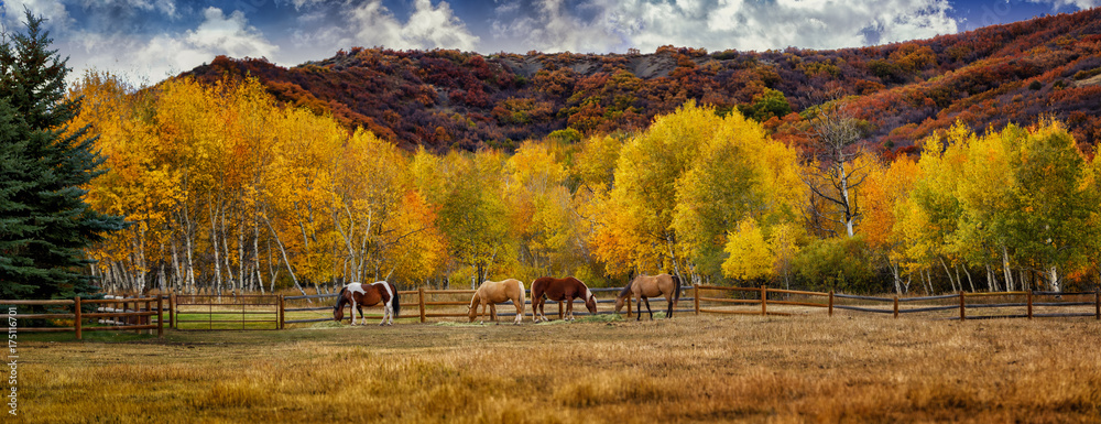 Fototapety, obrazy: Horses in Colorado during the fall