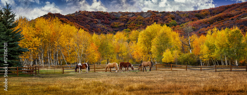 Horses in Colorado during the fall Canvas Print