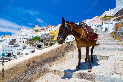 Donkey taxis in Santorini, Greece