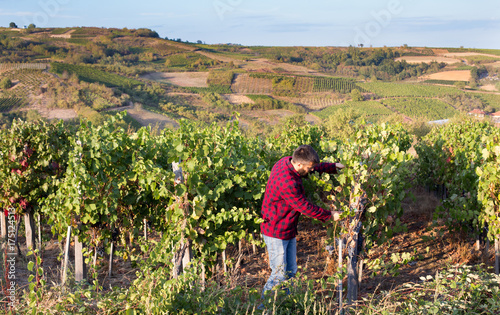 Fotografía  Farmer in vineyard