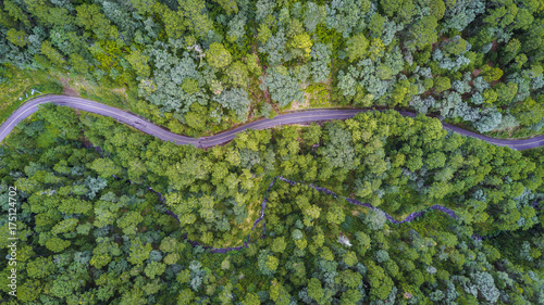 aerial of forest with road