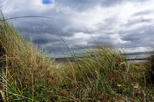 Foto auf AluDibond Nordsee sea,sand and grass