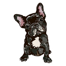 Illustration Of Dog Breed Fren...
