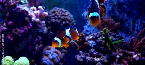 фотография  Aquarium popular fish