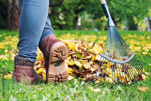 Cuadros en Lienzo Gardener woman raking up autumn leaves in garden.