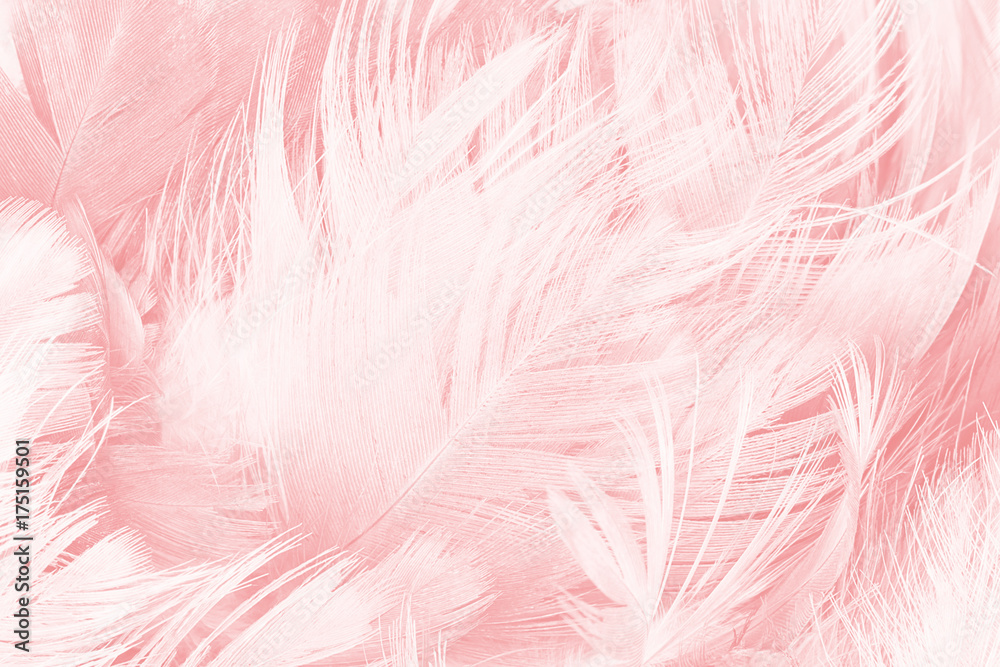 Coral Pink Vintage Color Trends Feather Texture Background Foto