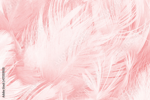 Leinwand Poster  Coral Pink vintage color trends feather texture background