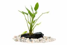Aquarium Plants On Small Driftwood
