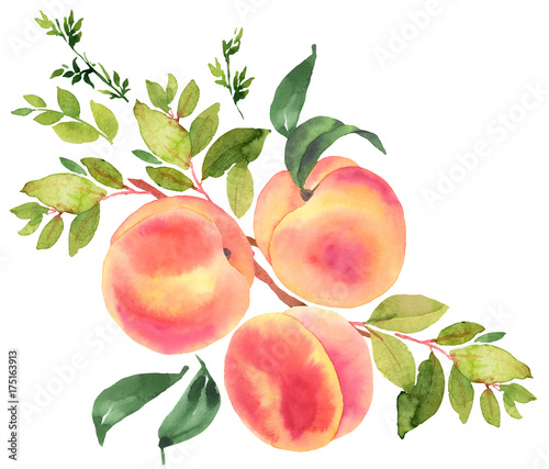 Photo Branch with peaches. Watercolor illustration