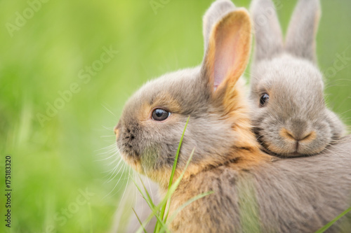 kuschelnde Kaninchenbabies Fototapet
