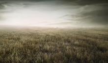 Landscape View Of Wild Dry Gra...