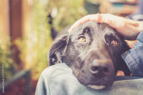 Leinwand Poster Hundekopf am Schoß, streicheln
