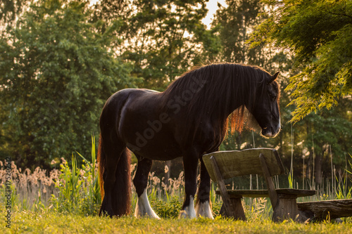 Shirehorse am See