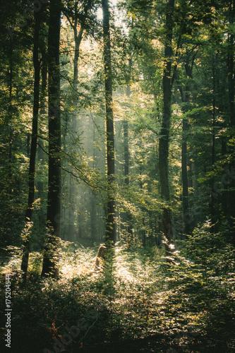 promienie-sloneczne-w-lesie
