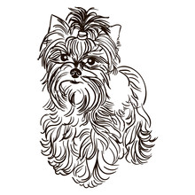 Illustration Of Dog Breed Yorkshire Terrier