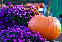 Arrangement Of Flowers And A Pumpkin