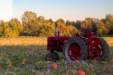 Tractor In A Field Of Pumpkin ...