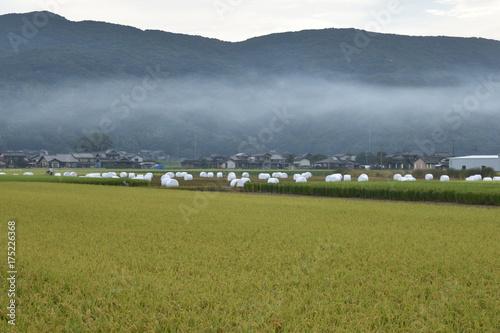 Foto auf Acrylglas Schwan 日本の田園風景