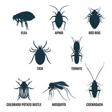 Set Of Insects Icons. Ant And ...