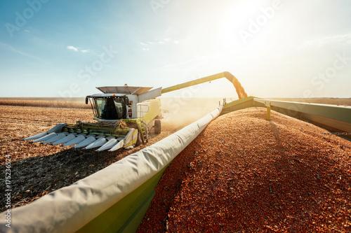 Vászonkép  Combine harvesting corn