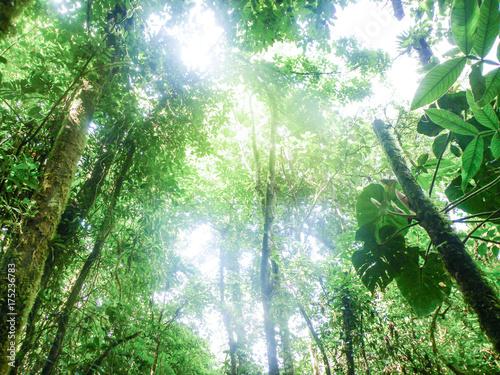 Recess Fitting Bamboo Luz entre árboles