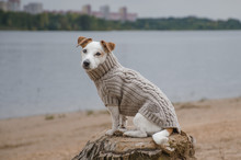 собака сидит в свитере напротив реки на пне