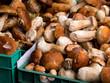 Swieże grzyby leśne na stole targowym