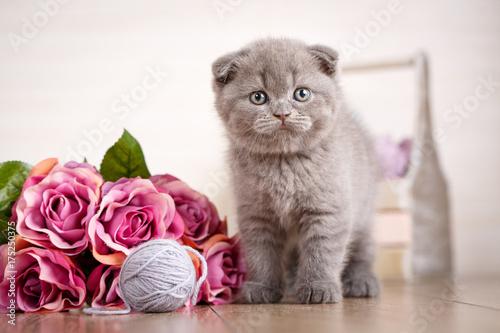 Zdjęcie XXL Kociak z bukietem róż bawi się piłką.