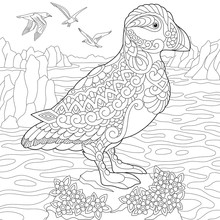 Coloring Page Of Puffin, Seabi...