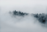 Minimal fog on top of trees sticking out of thick fog in Alaska in black and white  - 175253507