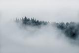 Minimalna mgła na szczycie drzew wystających z gęstej mgły na Alasce w czerni i bieli - 175253507