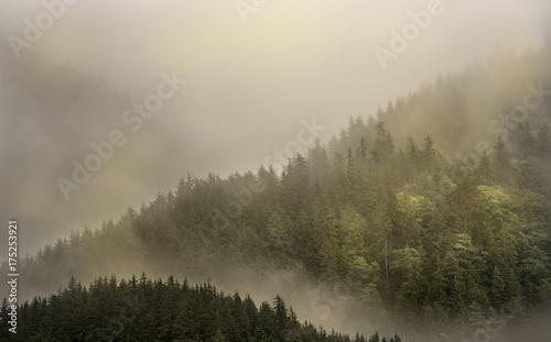 Mgła pokrywająca górskie lasy