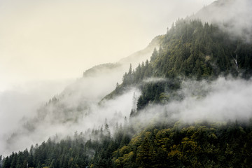 FototapetaMisty fog on top of mountains and tree top for nature landscape background