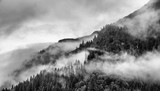 fog on mountain top with pine tree - 175254951