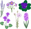 Set of different plants with purple flowers on white background