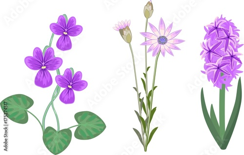 Set of garden plant with lilac flowers on white background
