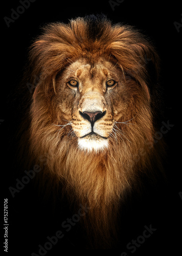 Spoed Fotobehang Leeuw Portrait of a Beautiful lion, lion in dark